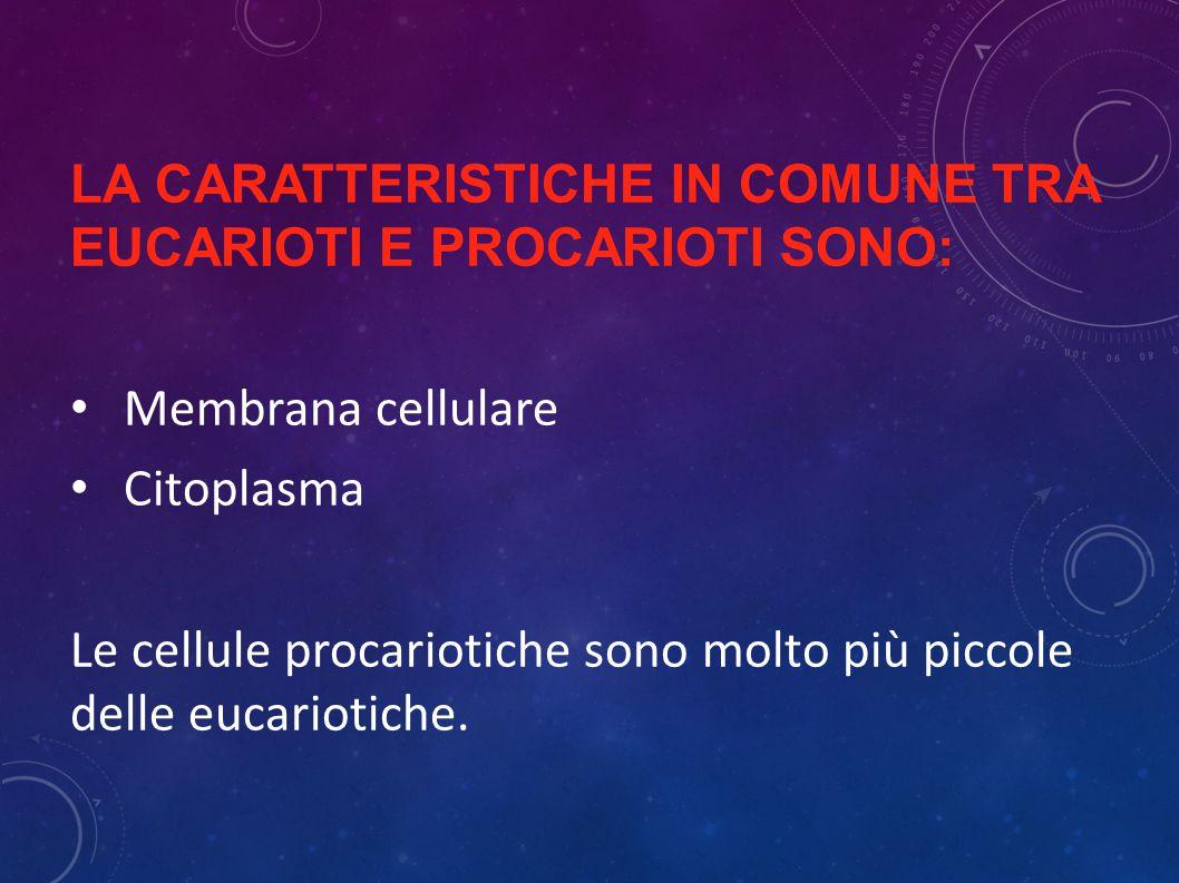 LA CARATTERISTICHE IN COMUNE TRA EUCARIOTI E PROCARIOTI SONO: Membrana cellulare Citoplasma Le cellule procariotiche sono molto più piccole delle eucariotiche.