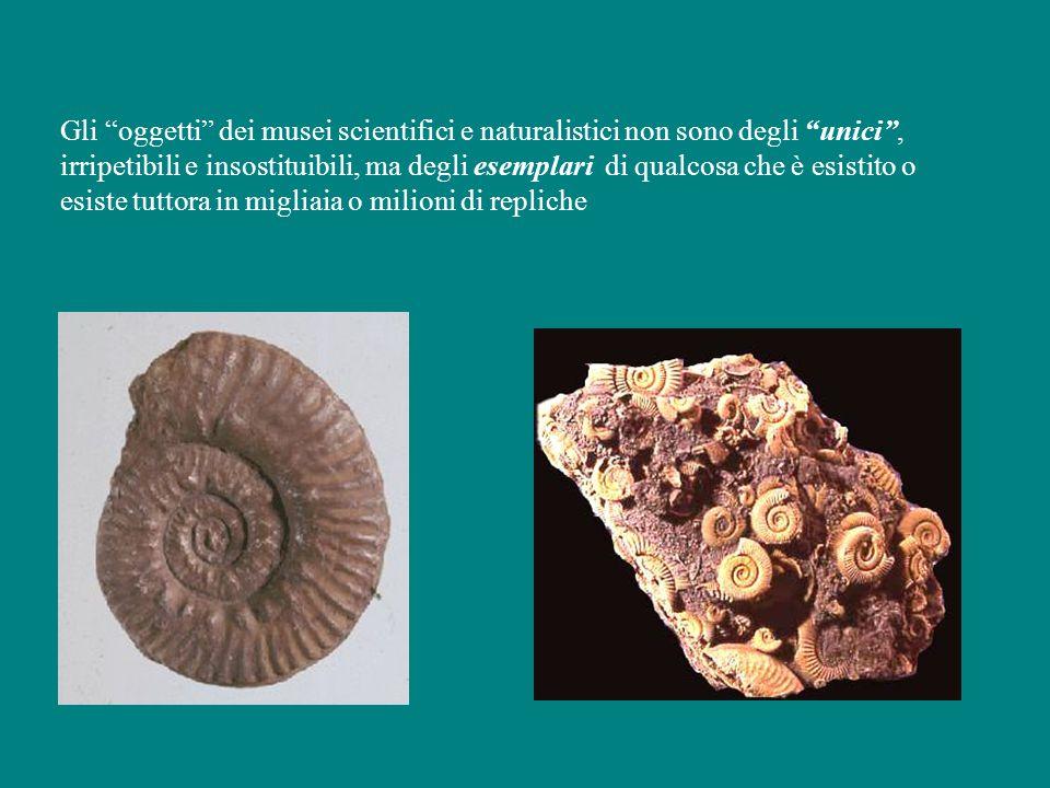 Gli oggetti dei musei scientifici e naturalistici non sono degli unici , irripetibili e insostituibili, ma degli esemplari di qualcosa che è esistito o esiste tuttora in migliaia o milioni di repliche
