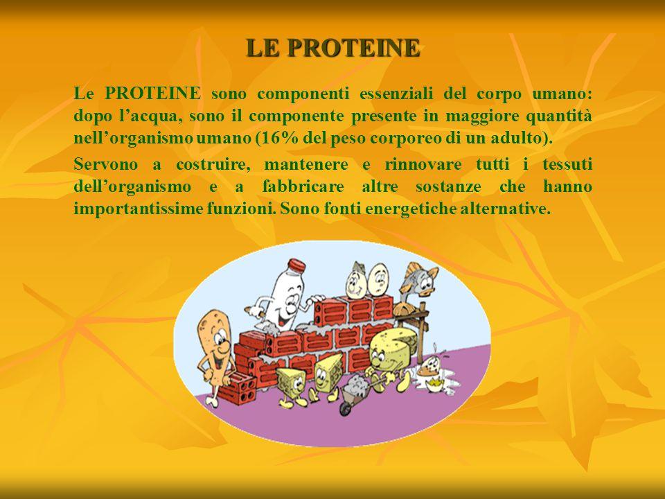 LE PROTEINE Le PROTEINE sono componenti essenziali del corpo umano: dopo l'acqua, sono il componente presente in maggiore quantità nell'organismo uman