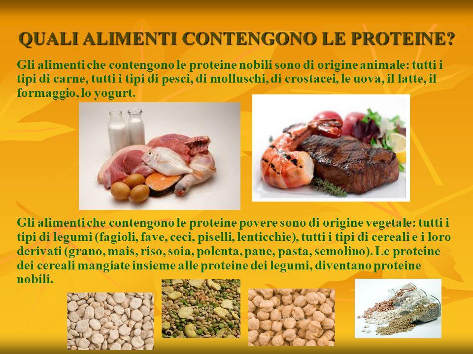 QUALI ALIMENTI CONTENGONO LE PROTEINE? Gli alimenti che contengono le proteine nobili sono di origine animale: tutti i tipi di carne, tutti i tipi di