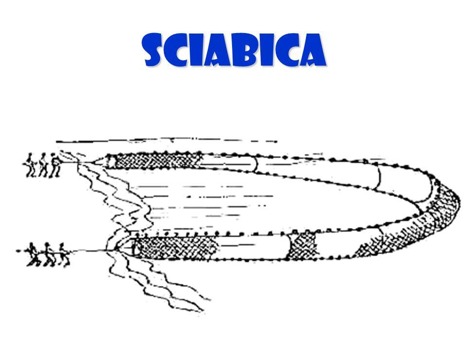 SCIABICA