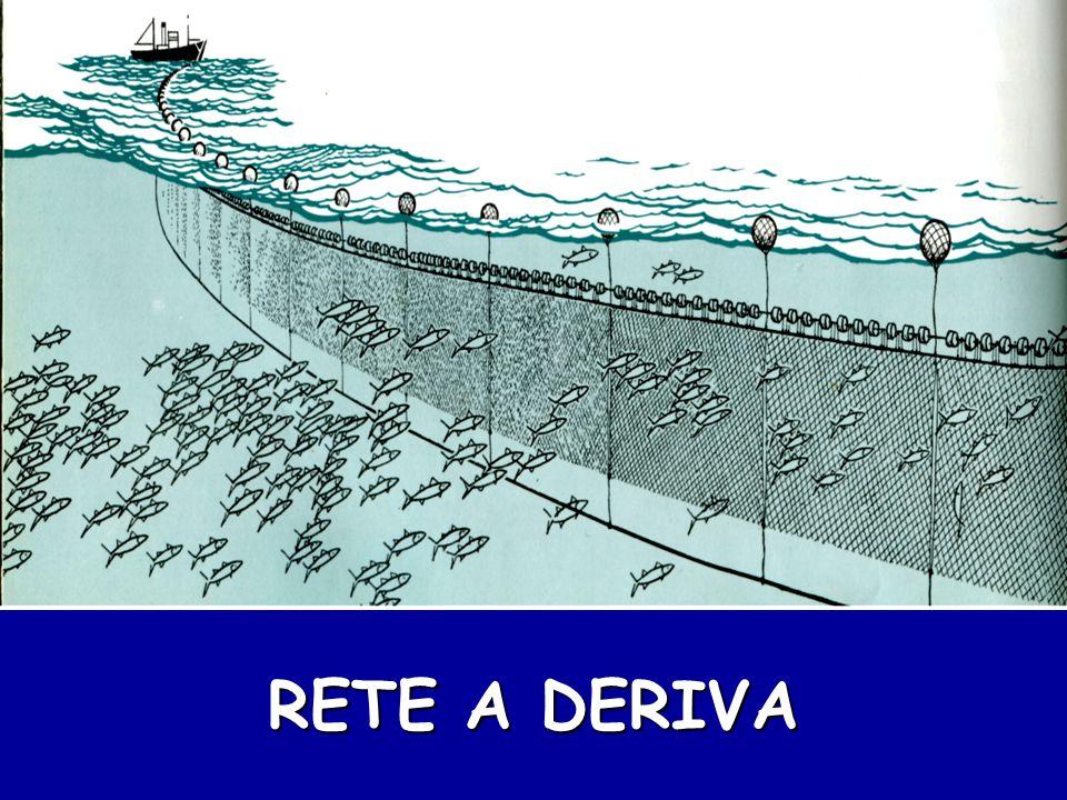 RETE A DERIVA