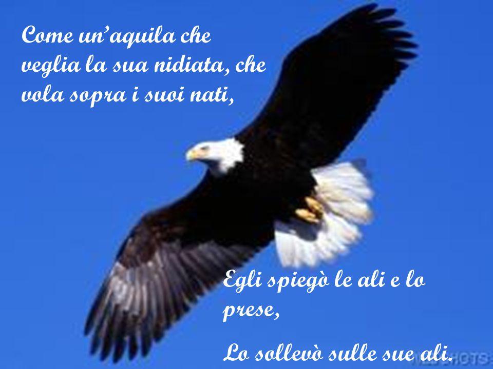 Come un'aquila che veglia la sua nidiata, che vola sopra i suoi nati, Egli spiegò le ali e lo prese, Lo sollevò sulle sue ali.