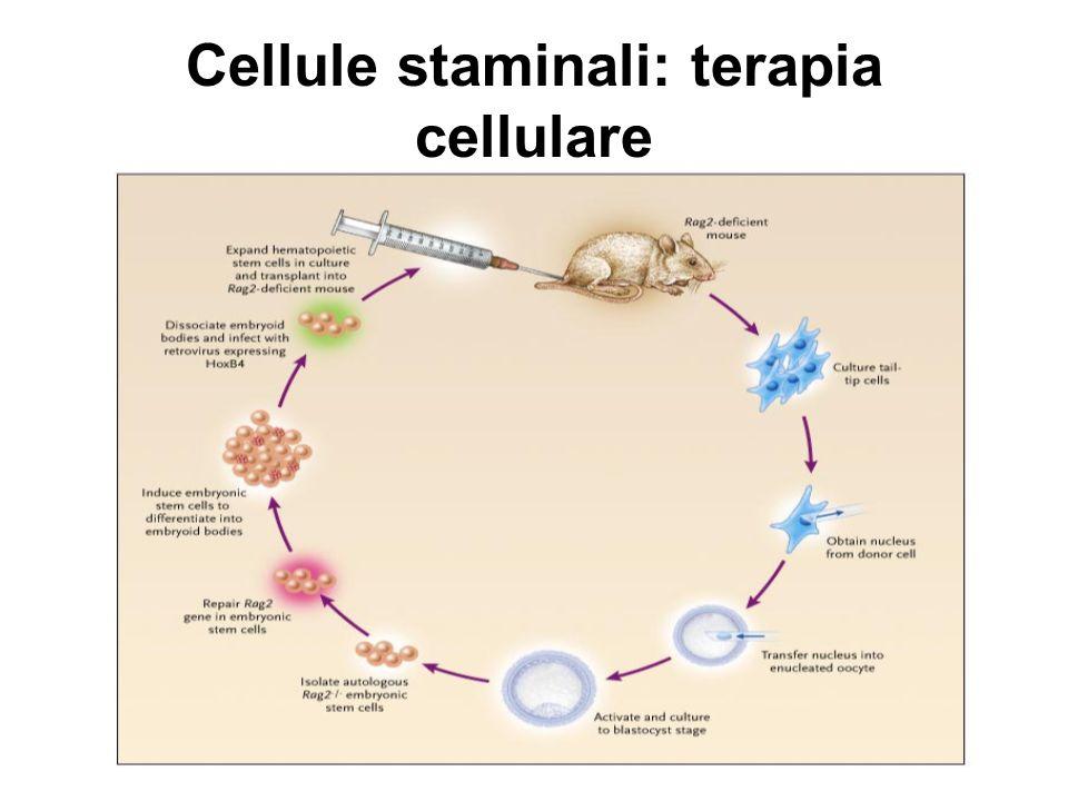 Cellule staminali: terapia cellulare