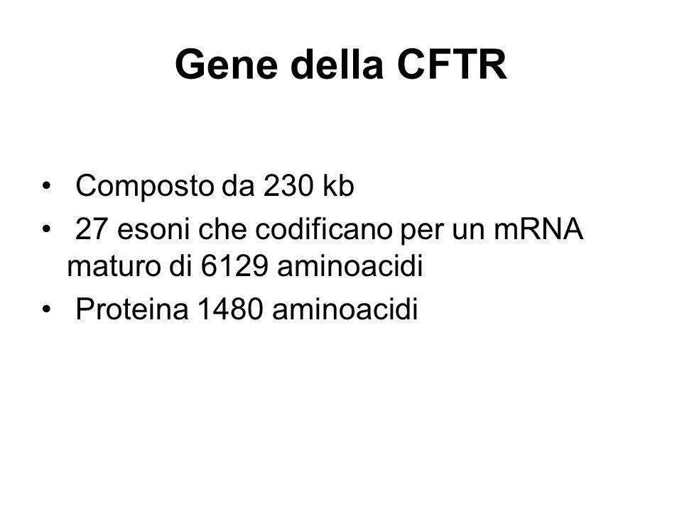Mutazioni Numerose mutazioni più di 2000 Mutazioni puntiformi: missense, frameshift, delezioni ed inserzioni Le varie mutazioni hanno frequenza diversa La più frequente è la delta F508 (delezione di tre nucleotidi)