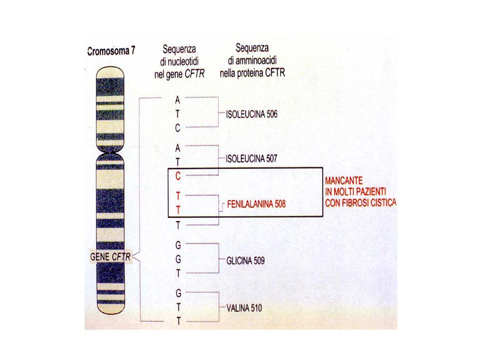 Classificazione delle mutazioni del gene della Fibrosi Cistica Le mutazioni della fibrosi cistica (gene CFTR) sono state suddivise in 5 classi in baseal loro effetto funzionale (Modificato da Zielenski e Tsui, Ann Rev Genetics 29: 796, 1995).