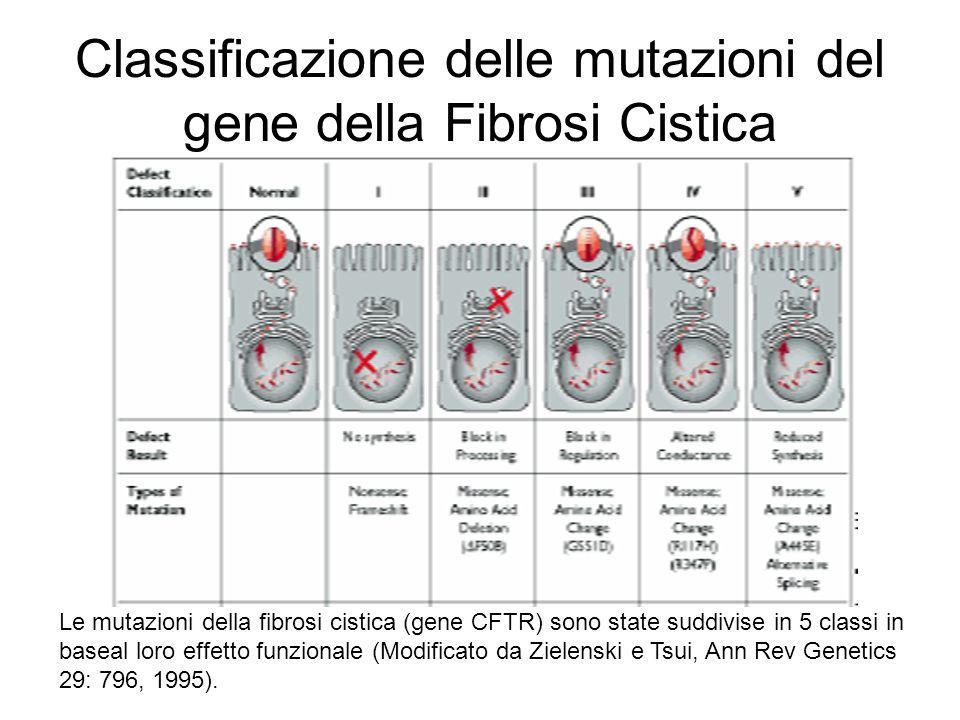 Classificazione delle mutazioni del gene della Fibrosi Cistica Le mutazioni della fibrosi cistica (gene CFTR) sono state suddivise in 5 classi in base