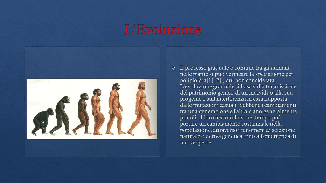  Il processo graduale è comune tra gli animali, nelle piante si può verificare la speciazione per poliploidia[1] [2], qui non considerata. L'evoluzio