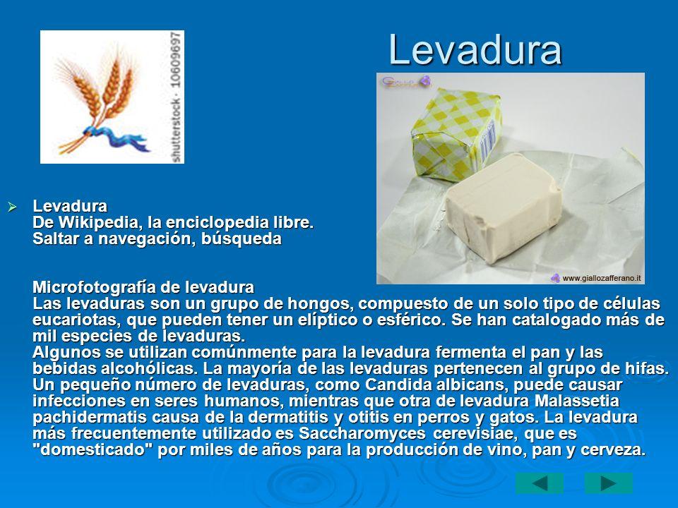 Levadura Levadura De Wikipedia, la enciclopedia libre. Saltar a navegación, búsqueda Microfotografía de levadura Las levaduras son un grupo de hongos,