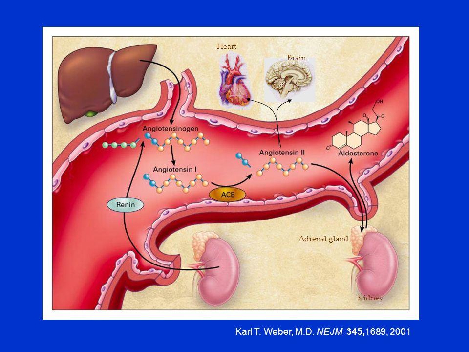 Karl T. Weber, M.D. NEJM 345,1689, 2001 Kidney Adrenal gland Brain Heart