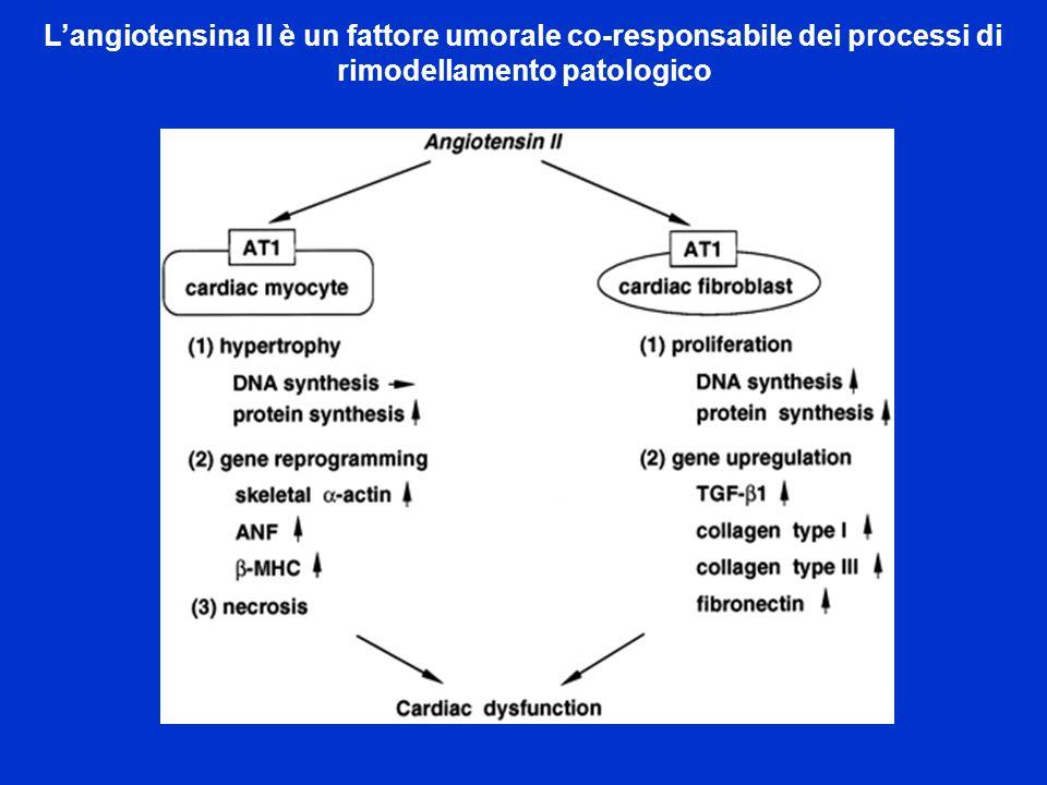 Langiotensina II è un fattore umorale co-responsabile dei processi di rimodellamento patologico