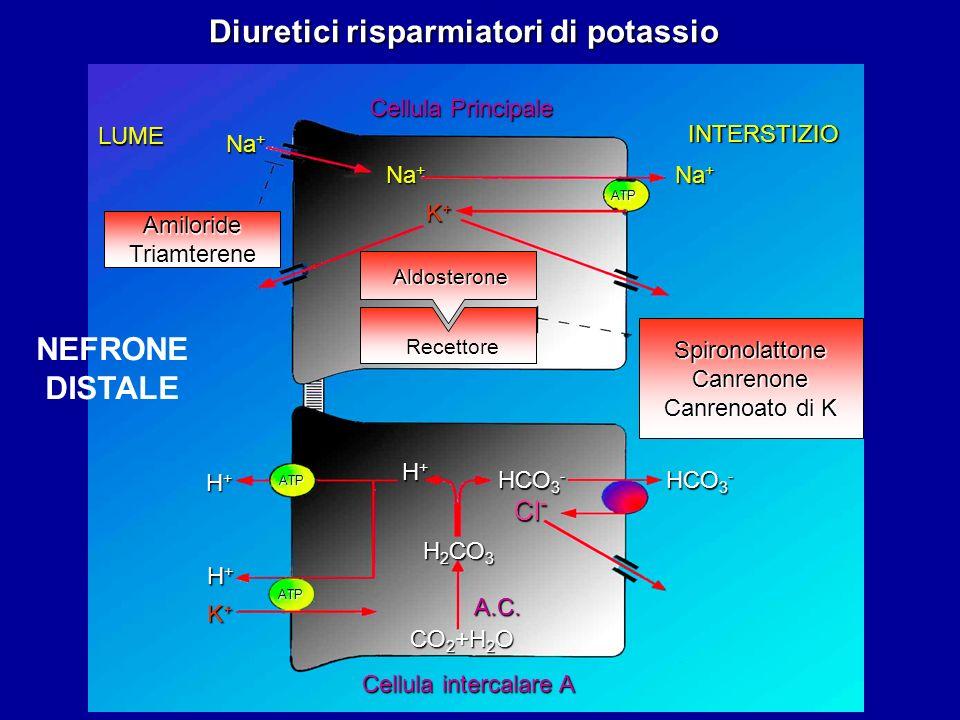 Diuretici risparmiatori di potassio Na + K+K+K+K+ ATP ATP ATP HCO 3 - Cl - H 2 CO 3 K+K+K+K+ H+H+H+H+ H+H+H+H+ H+H+H+H+ A.C. CO 2 +H 2 O Cellula inter