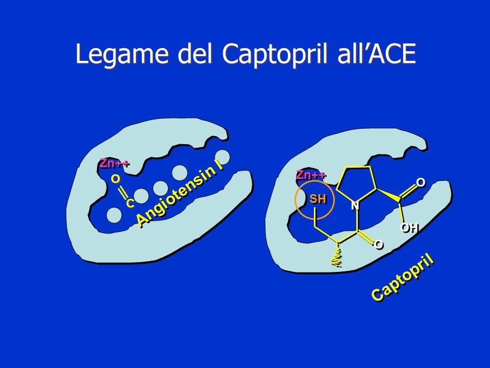 Legame del Captopril allACE Zn++ O O C C Angiotensin I Captopril O O O O OH N N SH