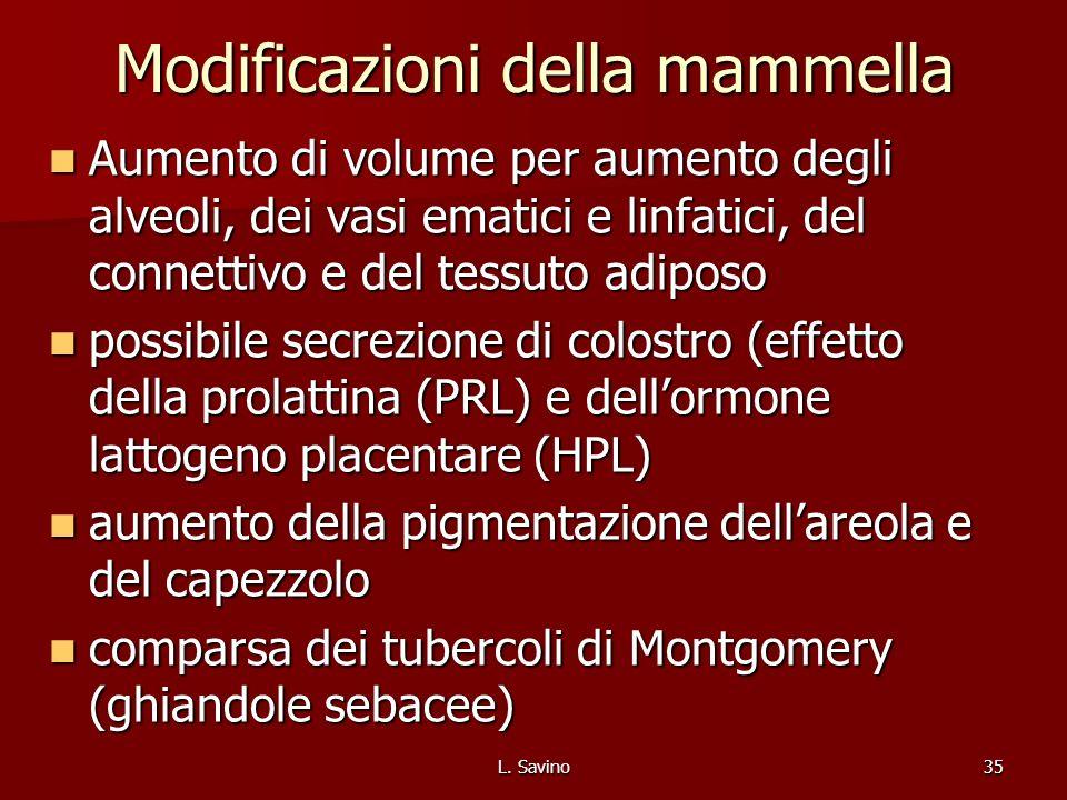L. Savino35 Modificazioni della mammella Aumento di volume per aumento degli alveoli, dei vasi ematici e linfatici, del connettivo e del tessuto adipo