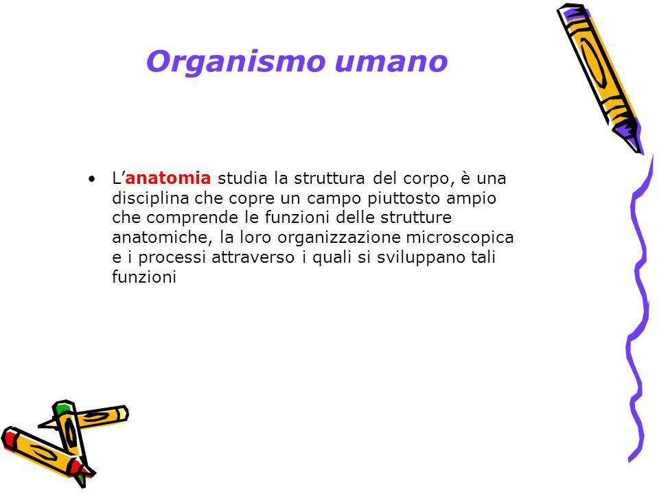 Organo cavo
