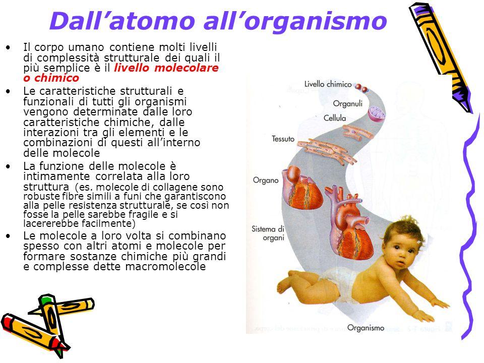 Dallatomo allorganismo Livello degli organuli.