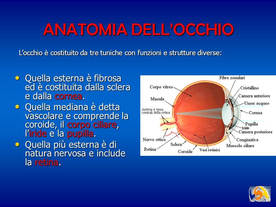 ANATOMIA DELLOCCHIO Quella esterna è fibrosa ed è costituita dalla sclera e dalla cornea. Quella esterna è fibrosa ed è costituita dalla sclera e dall