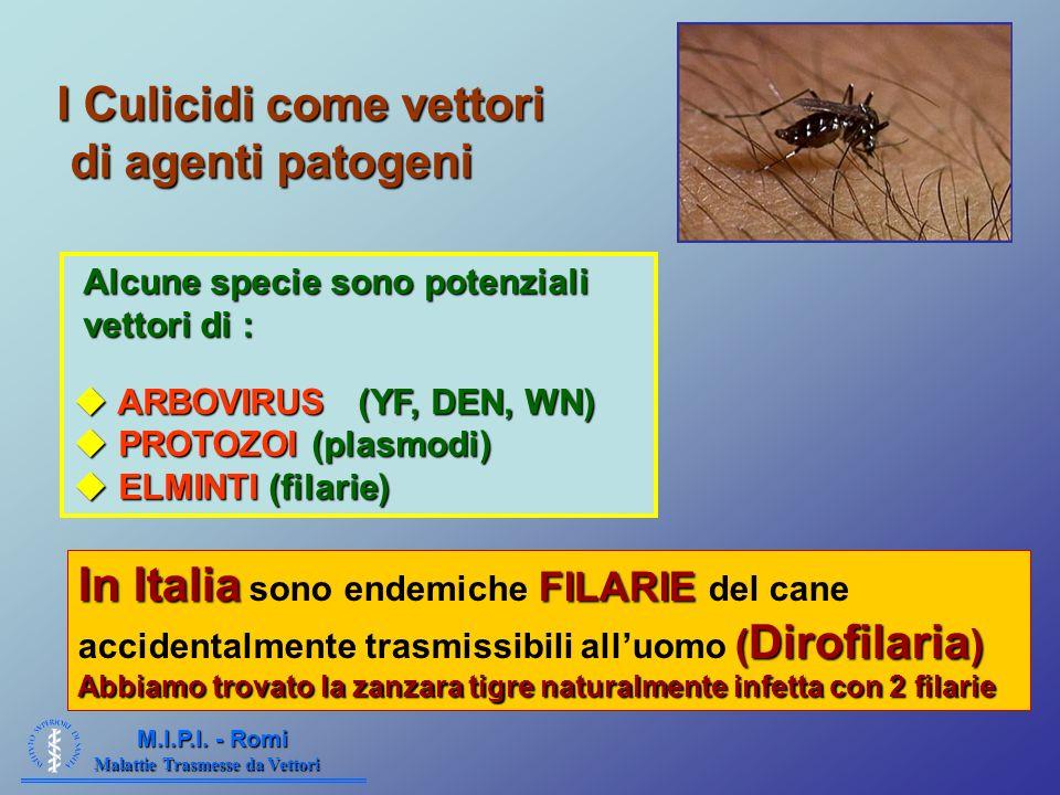 Malattie Trasmesse da Vettori M.I.P.I. - Romi I Culicidi come vettori di agenti patogeni Alcune specie sono potenziali Alcune specie sono potenziali v