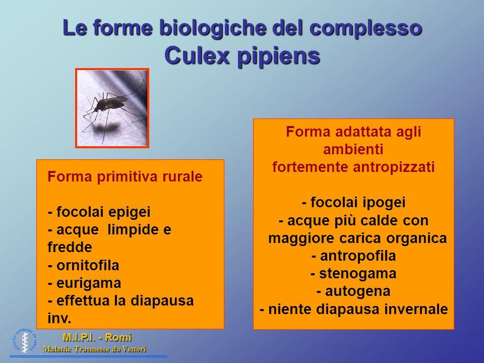 Malattie Trasmesse da Vettori M.I.P.I. - Romi Le forme biologiche del complesso Culex pipiens Forma primitiva rurale - focolai epigei - acque limpide