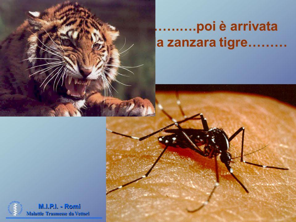 Malattie Trasmesse da Vettori M.I.P.I. - Romi …….….poi è arrivata la zanzara tigre………