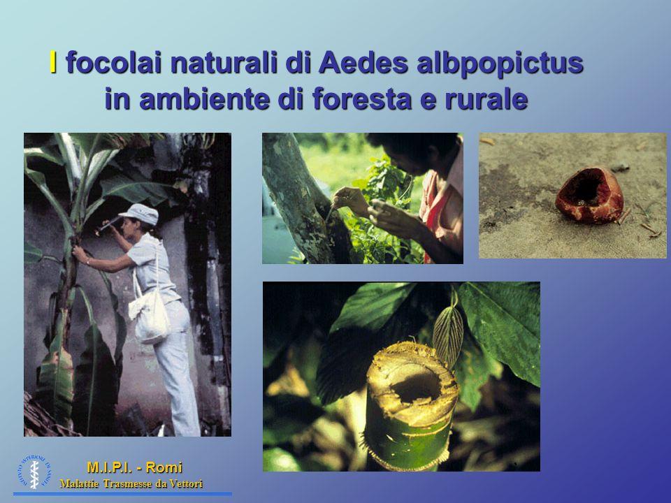 Malattie Trasmesse da Vettori M.I.P.I. - Romi I focolai naturali di Aedes albpopictus in ambiente di foresta e rurale