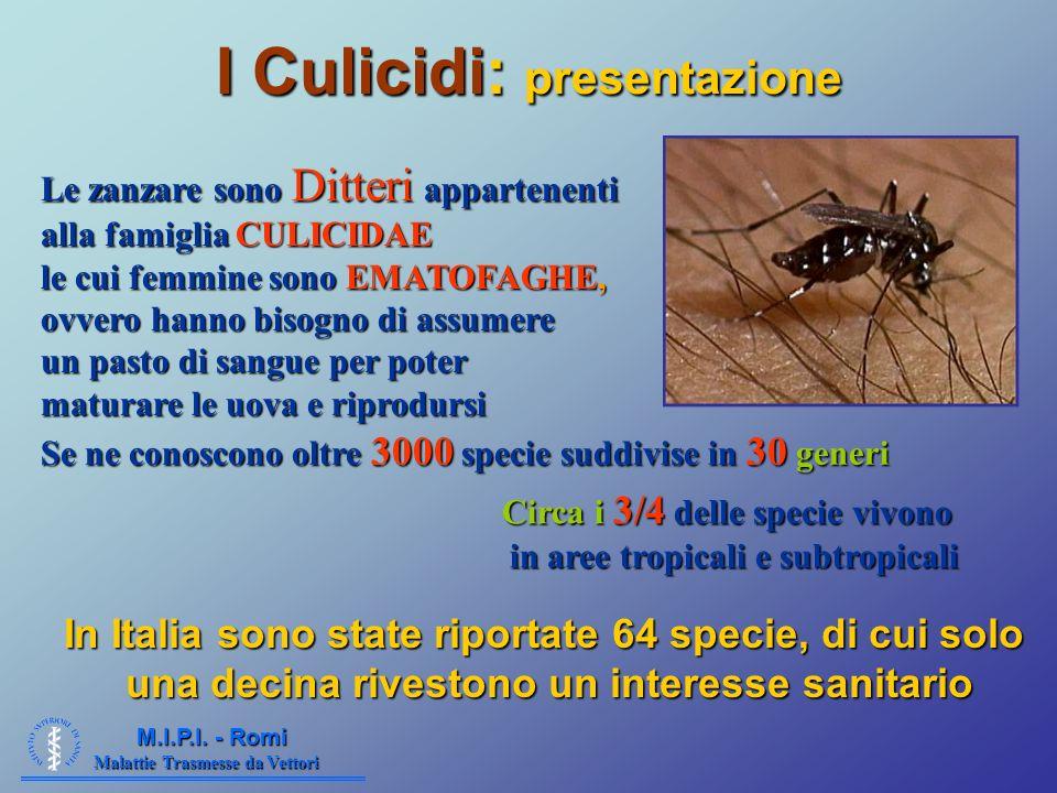 Malattie Trasmesse da Vettori M.I.P.I. - Romi I Culicidi: presentazione Le zanzare sono Ditteri appartenenti alla famiglia CULICIDAE le cui femmine so