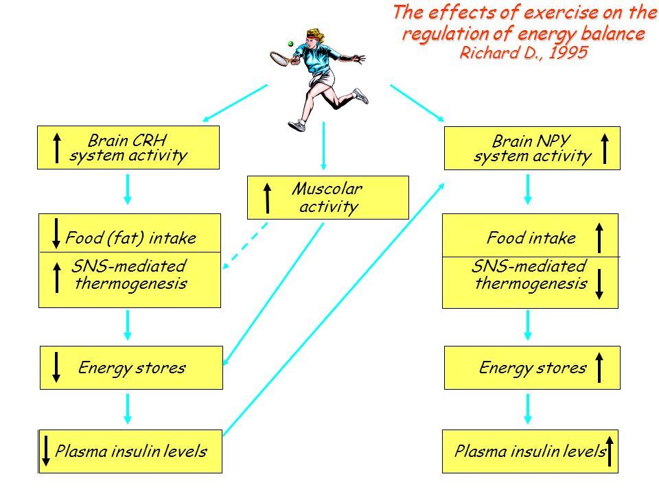 Plasma insulin levels Food (fat) intake SNS-mediated thermogenesis Plasma insulin levels Energy stores Food intake SNS-mediated thermogenesis Brain CR