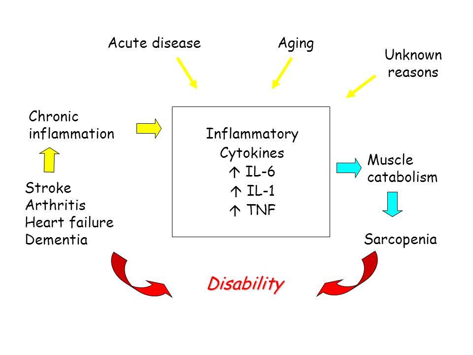 Acute disease Chronic inflammation Inflammatory Cytokines IL-6 IL-1 TNF Muscle catabolism Sarcopenia Disability Stroke Arthritis Heart failure Dementi