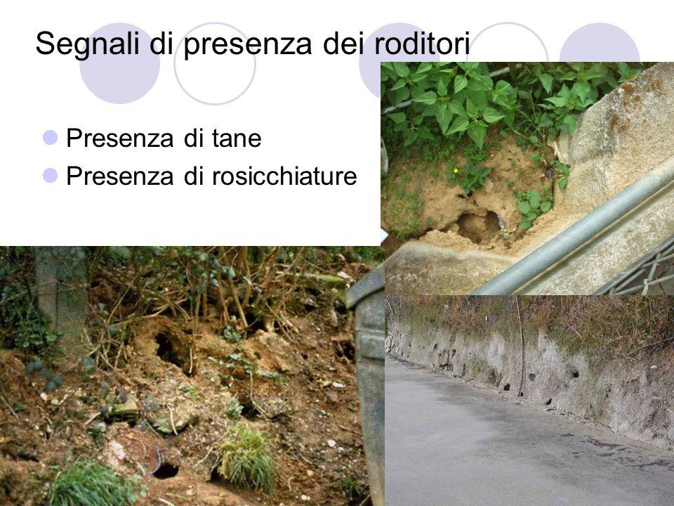 Una città libera da ratti e insetti vettori di malattie Segnali di presenza dei roditori Presenza di tane Presenza di rosicchiature