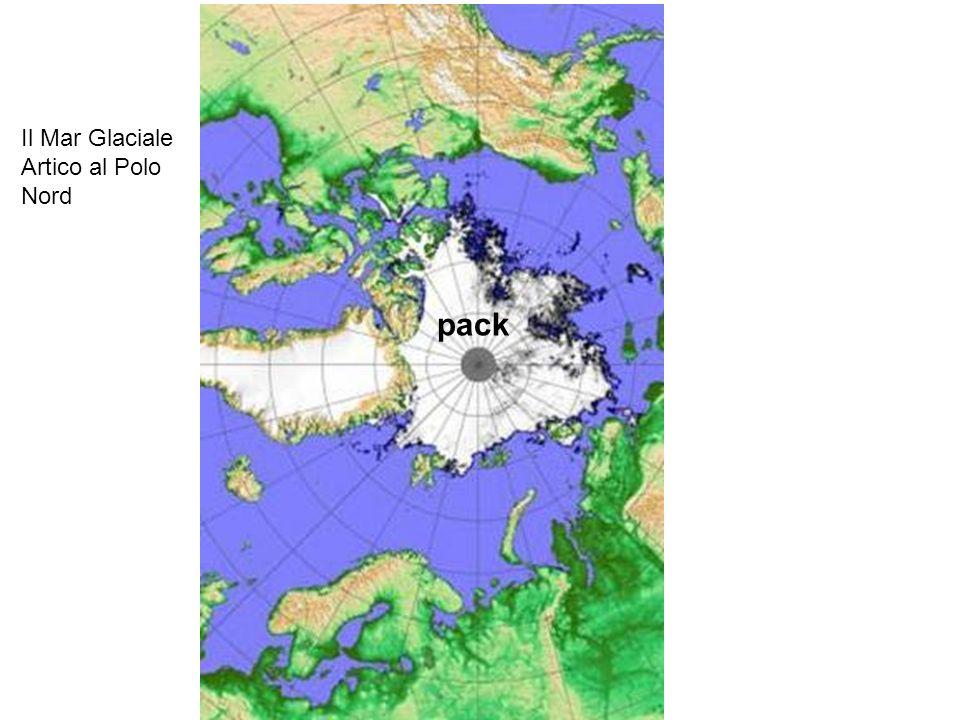 pack Il Mar Glaciale Artico al Polo Nord