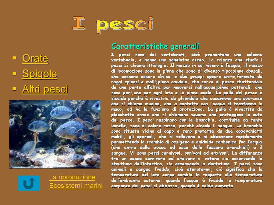 Orate Orate Orate Spigole Spigole Spigole Altri pesci Altri pesci Altri pesci Altri pesci Caratteristiche generali I pesci sono dei vertebrati, cioè p