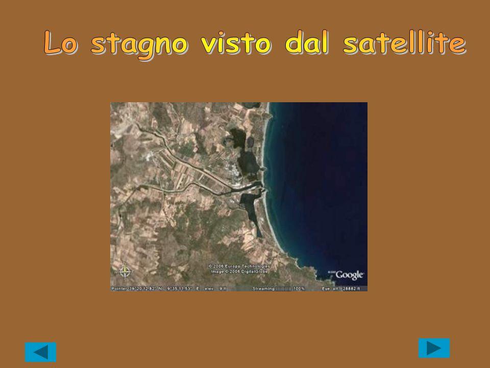 Nome scientifico: Sparus aurata (Linneo, 1758) Nome sardo: Cagnina, Canina, Canina de stanni, Carina, Corina, Caniottu.