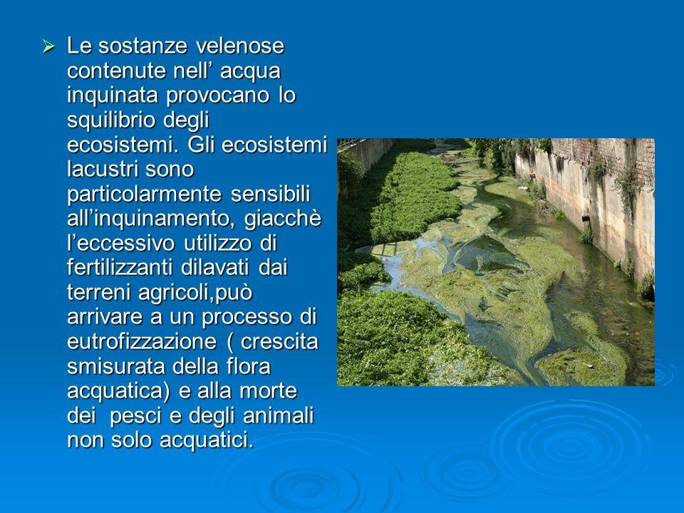 Le sostanze velenose contenute nell acqua inquinata provocano lo squilibrio degli ecosistemi. Gli ecosistemi lacustri sono particolarmente sensibili a