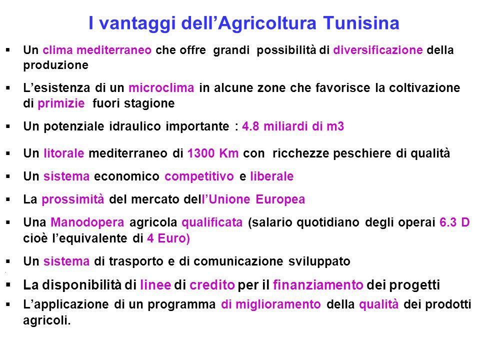 I vantaggi dellAgricoltura Tunisina Un clima mediterraneo che offre grandi possibilità di diversificazione della produzione Lesistenza di un microclim