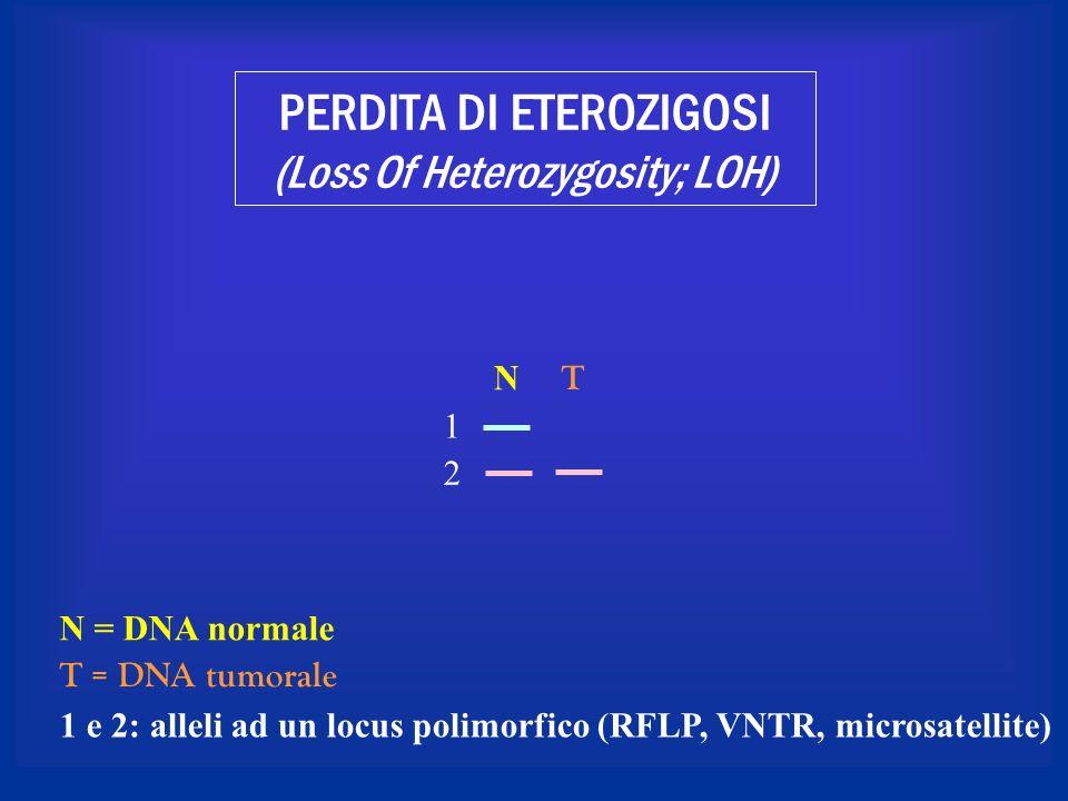 PERDITA DI ETEROZIGOSI (Loss Of Heterozygosity; LOH) N T 1 2 N = DNA normale T = DNA tumorale 1 e 2: alleli ad un locus polimorfico (RFLP, VNTR, micro
