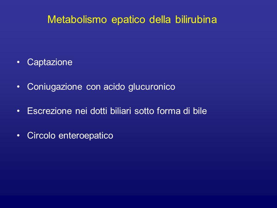 Metabolismo epatico della bilirubina Captazione Coniugazione con acido glucuronico Escrezione nei dotti biliari sotto forma di bile Circolo enteroepat