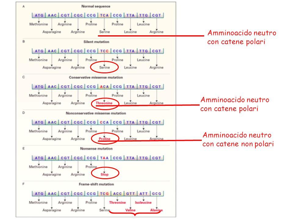 Amminoacido neutro con catene polari Amminoacido neutro con catene polari Amminoacido neutro con catene non polari