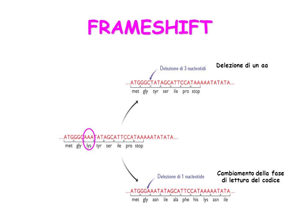FRAMESHIFT Delezione di un aa Cambiamento della fase di lettura del codice