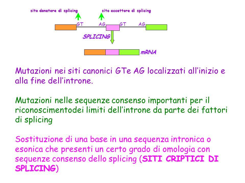 Mutazioni nei siti canonici GTe AG localizzati allinizio e alla fine dellintrone. Mutazioni nelle sequenze consenso importanti per il riconoscimentode