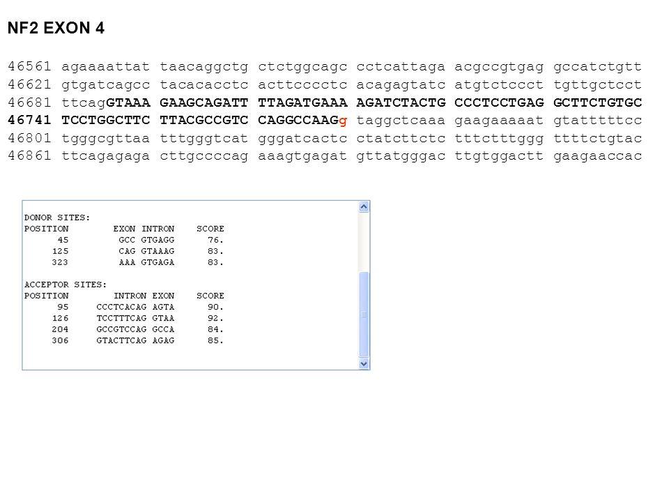 NF2 EXON 4 46561 agaaaattat taacaggctg ctctggcagc cctcattaga acgccgtgag gccatctgtt 46621 gtgatcagcc tacacacctc acttcccctc acagagtatc atgtctccct tgttgc
