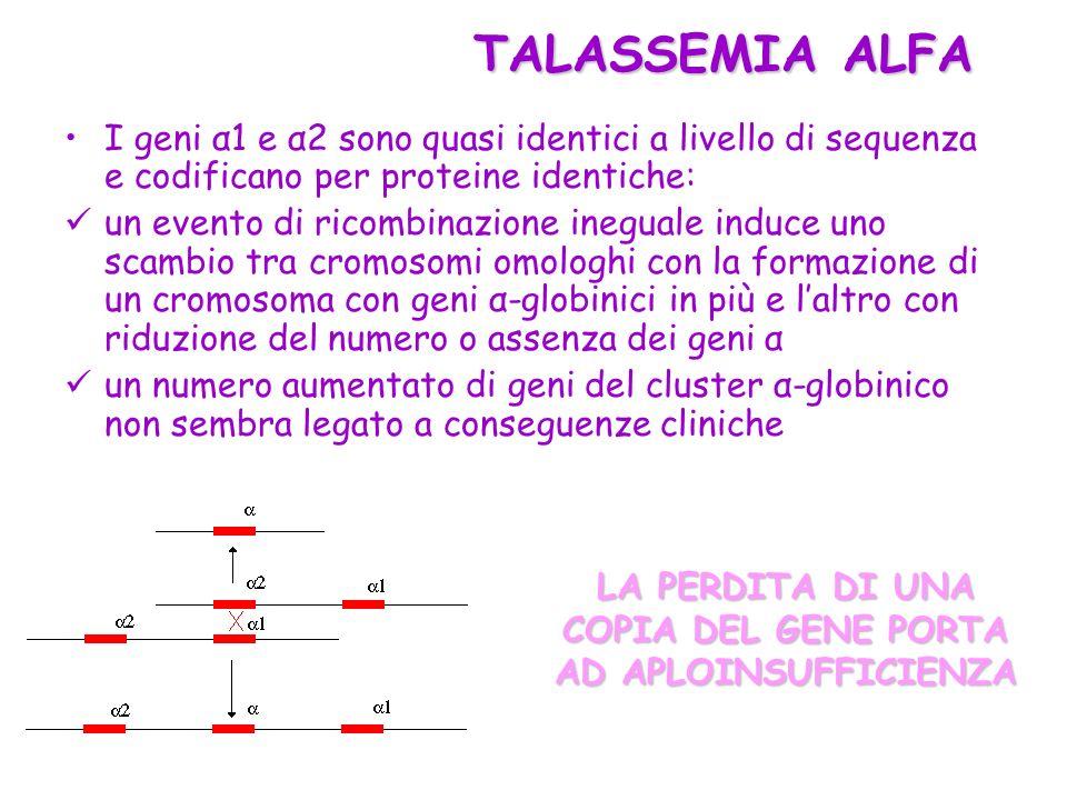 I geni α1 e α2 sono quasi identici a livello di sequenza e codificano per proteine identiche: un evento di ricombinazione ineguale induce uno scambio