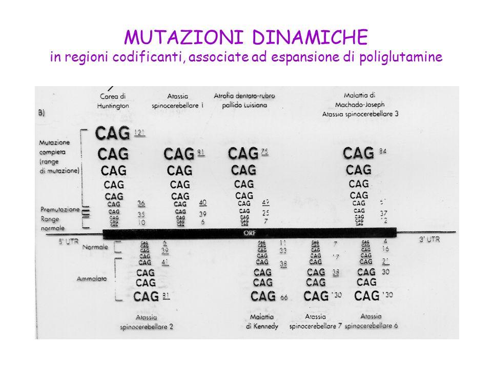 MUTAZIONI DINAMICHE in regioni codificanti, associate ad espansione di poliglutamine