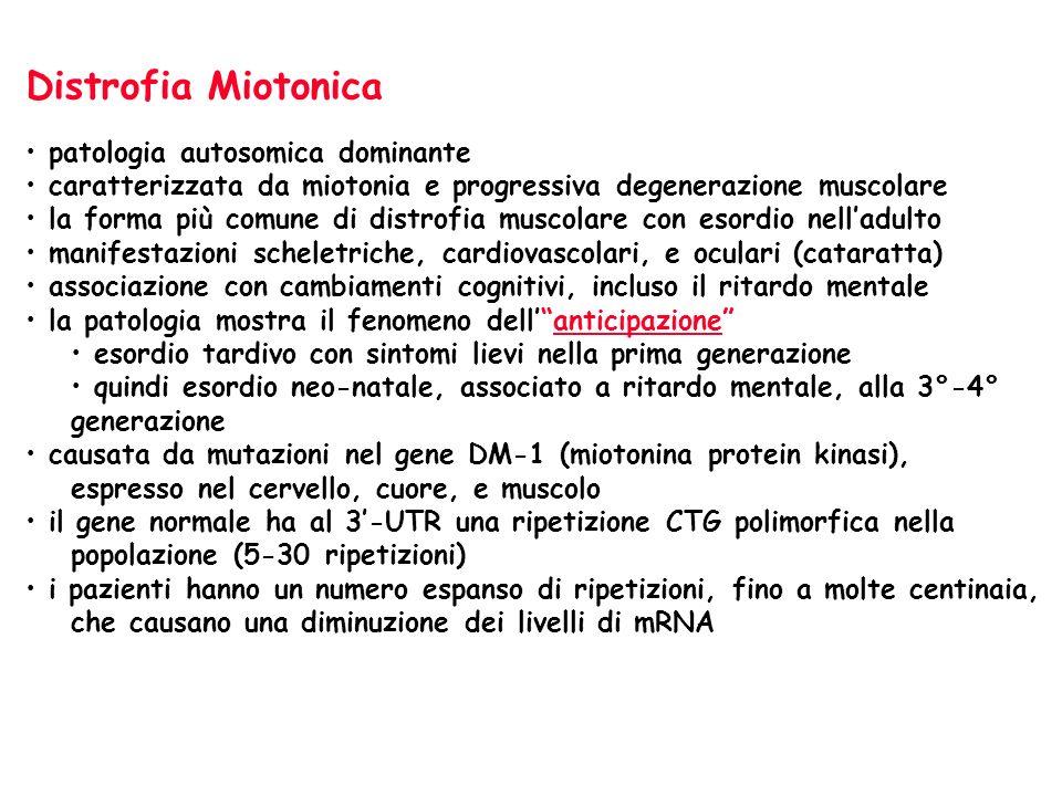 Distrofia Miotonica patologia autosomica dominante caratterizzata da miotonia e progressiva degenerazione muscolare la forma più comune di distrofia m