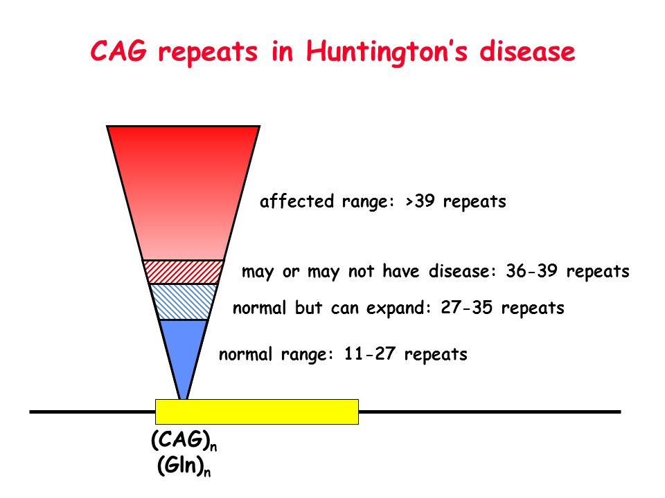 affected range: >39 repeats CAG repeats in Huntingtons disease normal range: 11-27 repeats may or may not have disease: 36-39 repeats normal but can e
