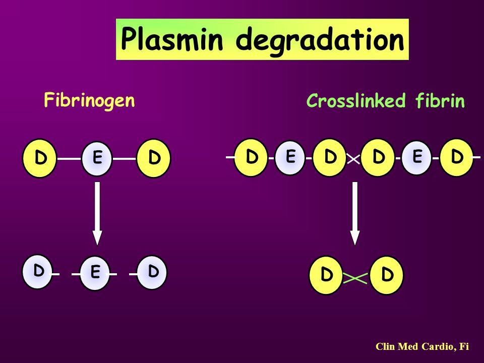 Plasmin degradation Fibrinogen Crosslinked fibrin D E D E D D D E D D E D D D Clin Med Cardio, Fi