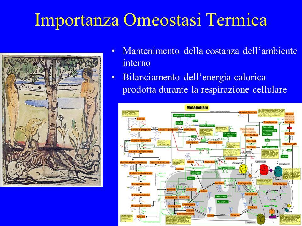 Importanza Omeostasi Termica Mantenimento della costanza dellambiente interno Bilanciamento dellenergia calorica prodotta durante la respirazione cell
