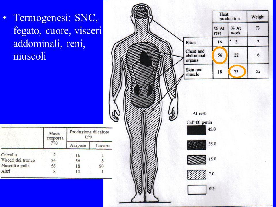 Meccanismo di induzione della febbre Pirogeni esogeni Pirogeni endogeni