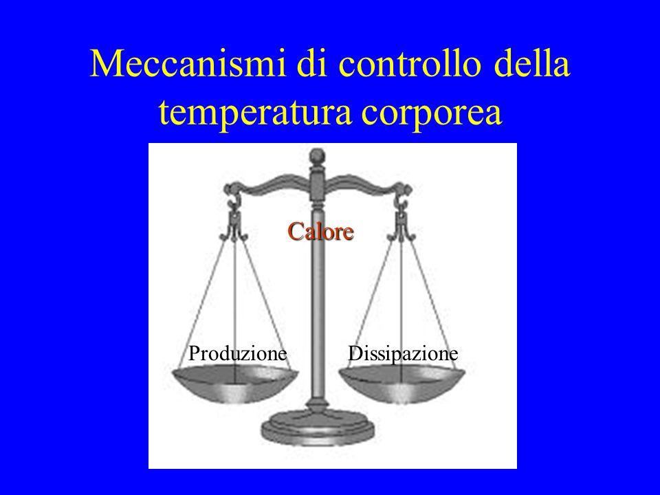 Meccanismi di controllo della temperatura corporea ProduzioneDissipazione Calore