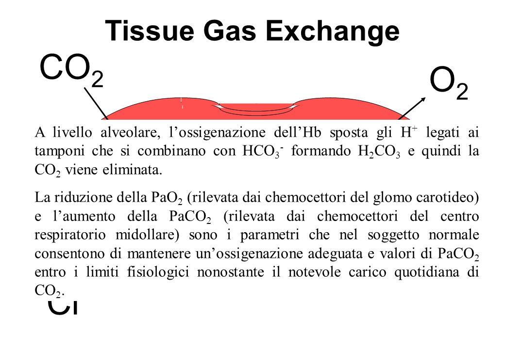 Tissue Gas Exchange HCO 3 - +H + O2O2 H + +HbO 2 H + Hb+O 2 CO 2 Cl - A livello alveolare, lossigenazione dellHb sposta gli H + legati ai tamponi che