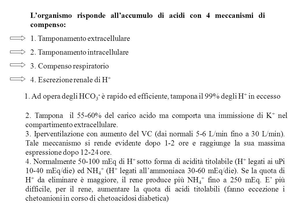 Lorganismo risponde allaccumulo di acidi con 4 meccanismi di compenso: 1. Tamponamento extracellulare 2. Tamponamento intracellulare 3. Compenso respi
